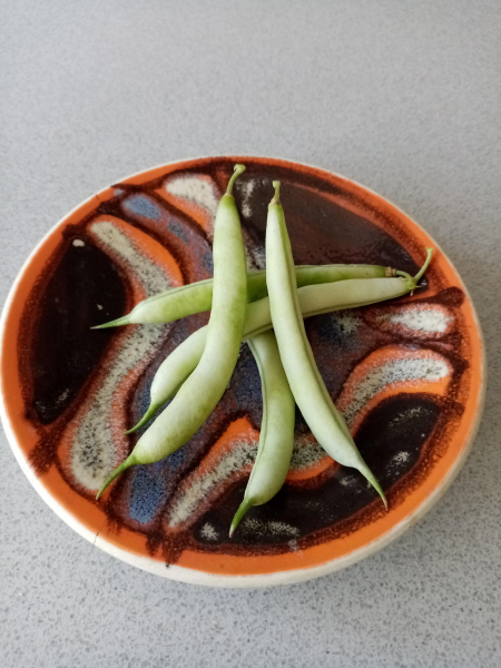 Dwarf French Bean Ice Crystal Wax harvested pods
