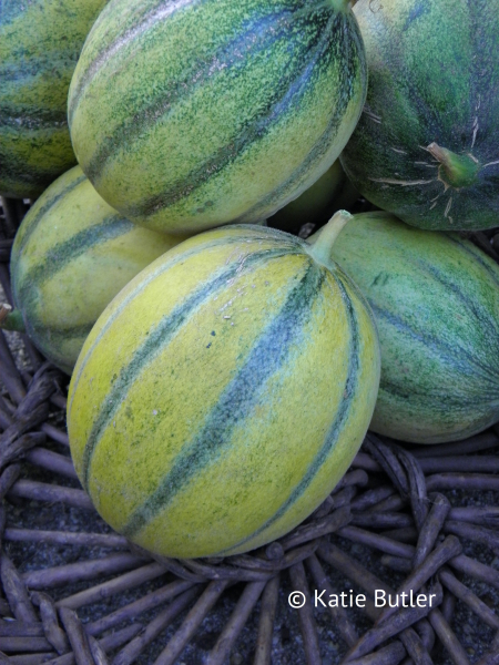 Melon Cantalun harvested fruits copyright Katie Butler