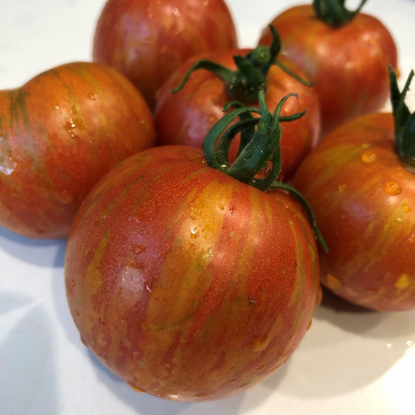 Tomato Darby Striped Red Yellow copyright Hannah Rogers