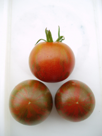 Tomato Darby Striped Red Green group