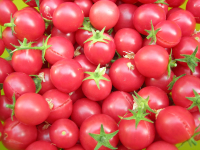 Tomato Whippersnapper