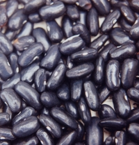 Dwarf French Bean Black Valentine